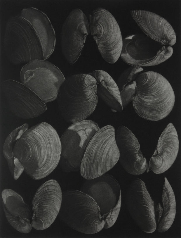 Clams by Judith Rothchild - Davidson Galleries