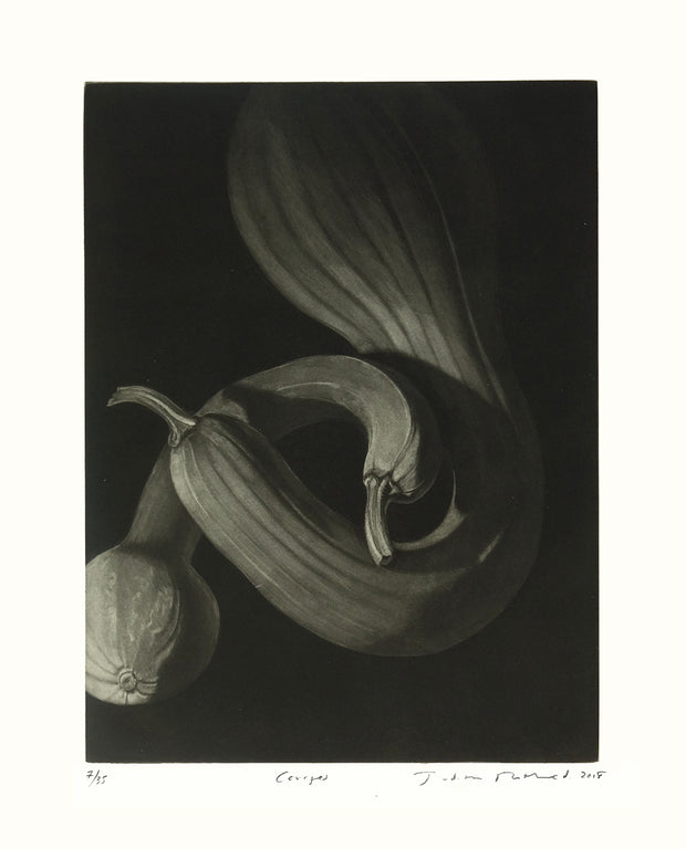 Courges by Judith Rothchild - Davidson Galleries