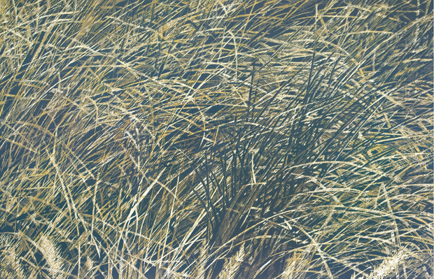 Waving Grass by Zha Sai - Davidson Galleries