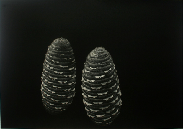 Pine Seed by Boonmee Sangkhum - Davidson Galleries
