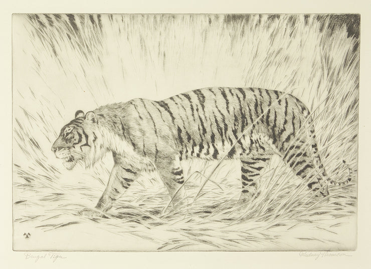Bengal Tiger by Rodney Thomson - Davidson Galleries