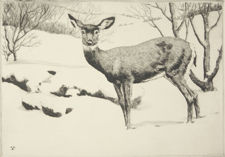 Little Doe by Rodney Thomson - Davidson Galleries