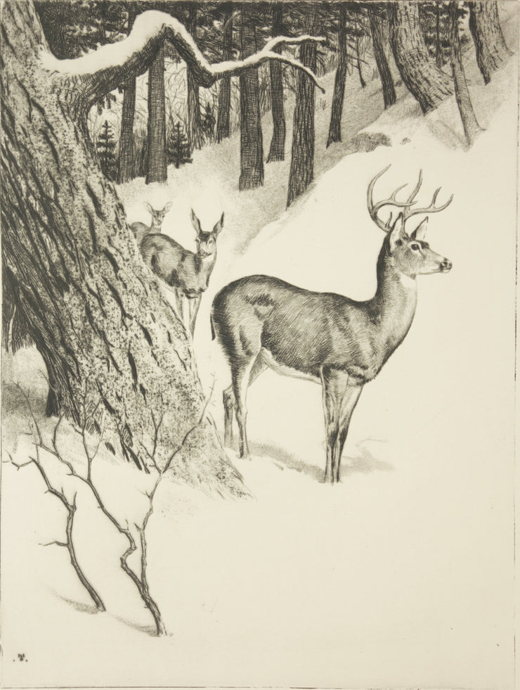 Deer Family by Rodney Thomson - Davidson Galleries