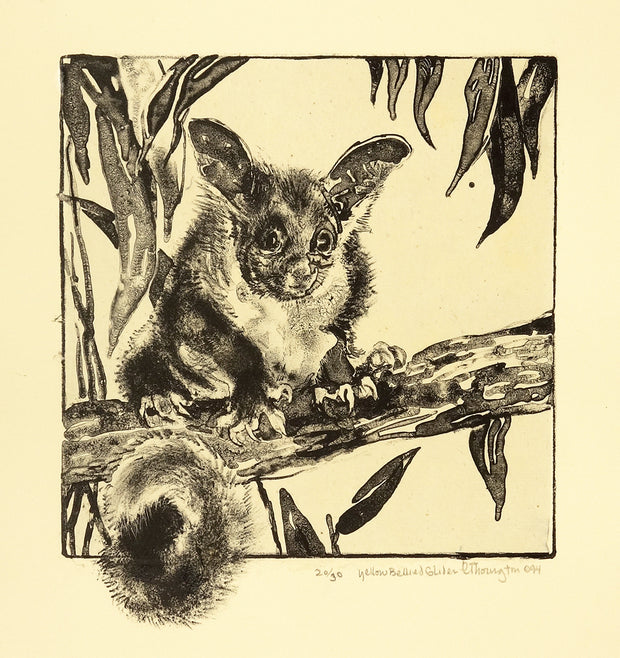Yellow Bellied Glider by Caroline Thorington - Davidson Galleries