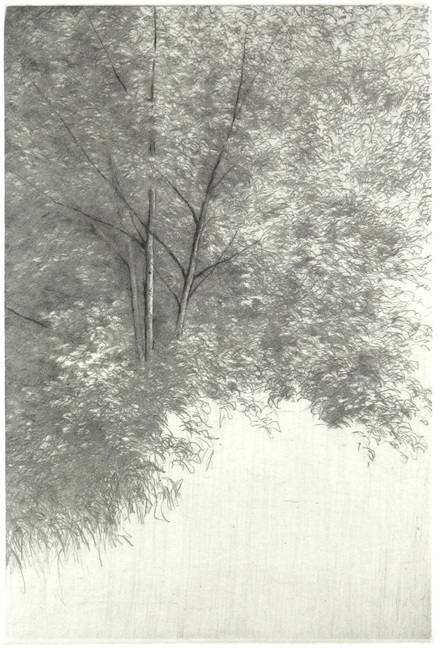 Nature, Summer VIII by Shigeki Tomura - Davidson Galleries