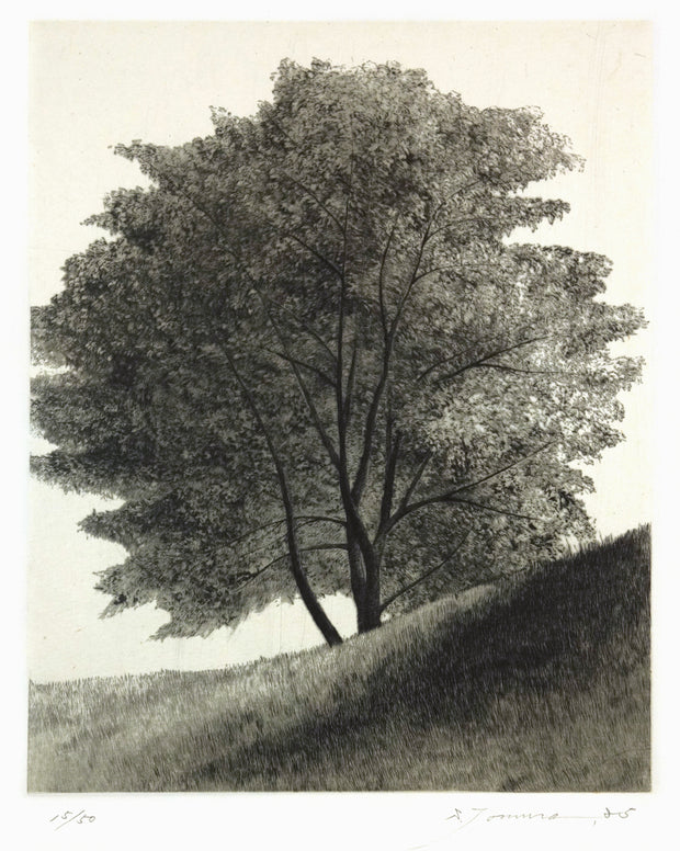 Shade of a Tree by Shigeki Tomura - Davidson Galleries