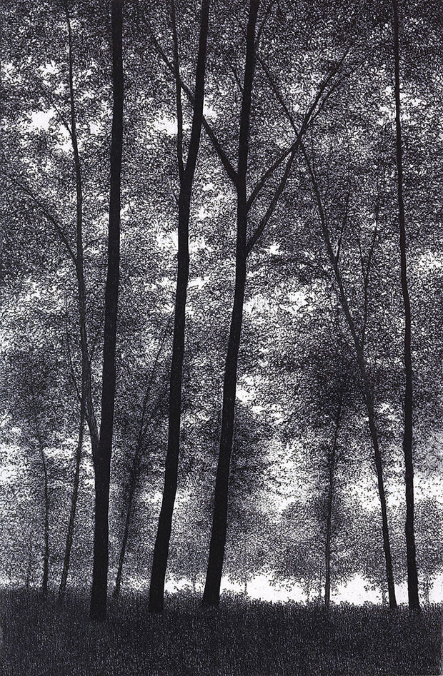 Pathway in the Forest II by Shigeki Tomura - Davidson Galleries