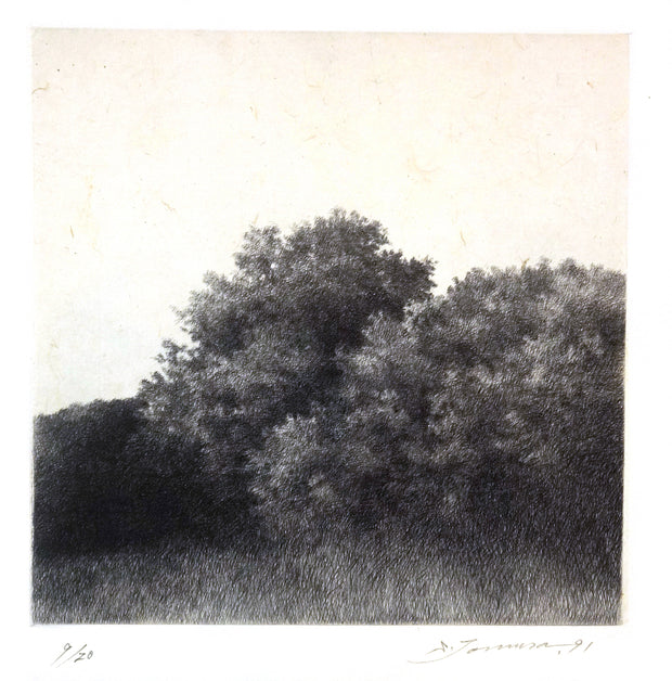 A Forest, at Dawn V by Shigeki Tomura - Davidson Galleries