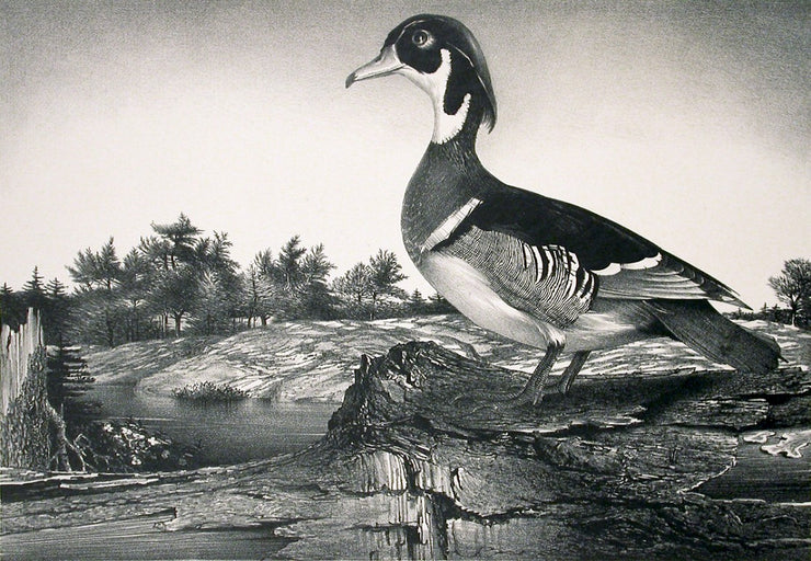 Wood Duck (Greenport, New York) by Stow Wengenroth - Davidson Galleries