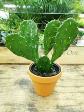 Load image into Gallery viewer, Bunny Ear Cactus