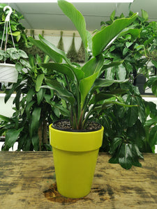 "Bird of Paradise 14"" Pot"