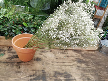 Load image into Gallery viewer, Dried Baby's Breath