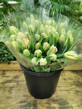 Load image into Gallery viewer, 10 Parrot Tulips