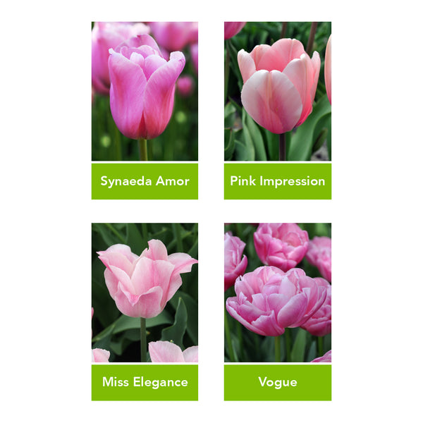 Marco's Tulip Bulb Selection