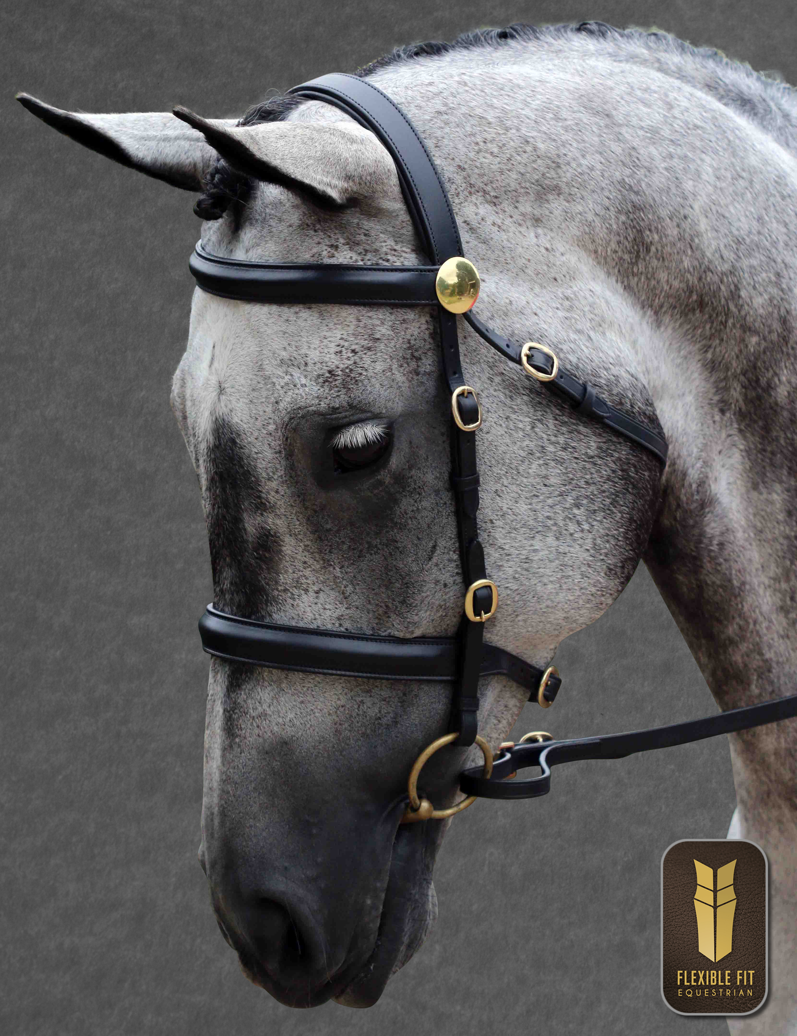BLACK IN HAND BRIDLE BRASS FITTINGS RAISED BROWBAND - RAISED NOSEBAND