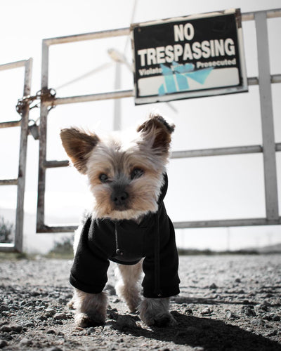 5 Reasons Why Your Dog Should Wear Clothes