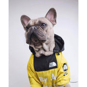 BY ANY TREATS WINDBREAKER-Pawlenciaga Pets