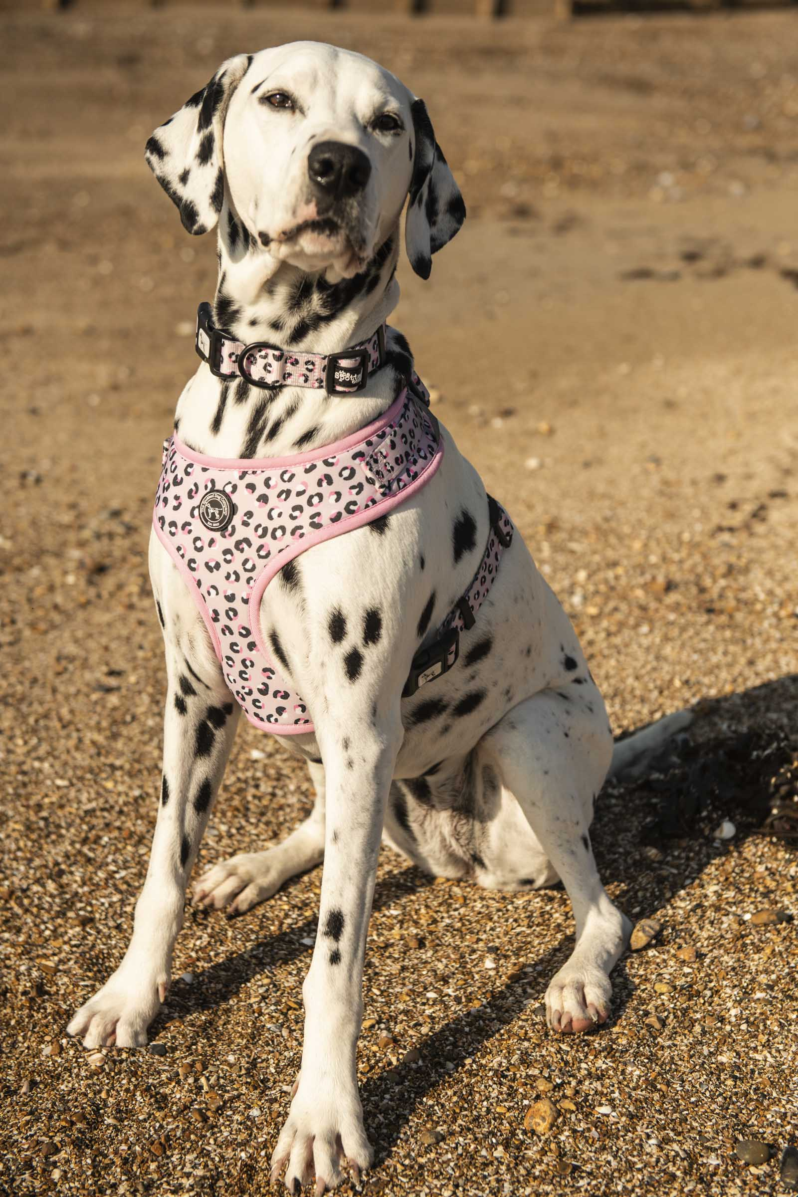 You Jane Dog Harness - the spotted dog company