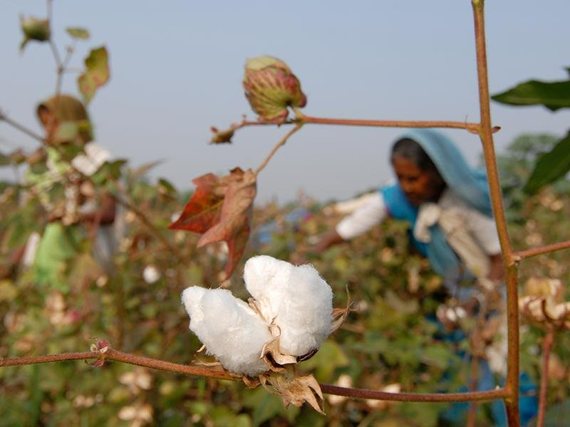 The Advantages of Organic Cotton