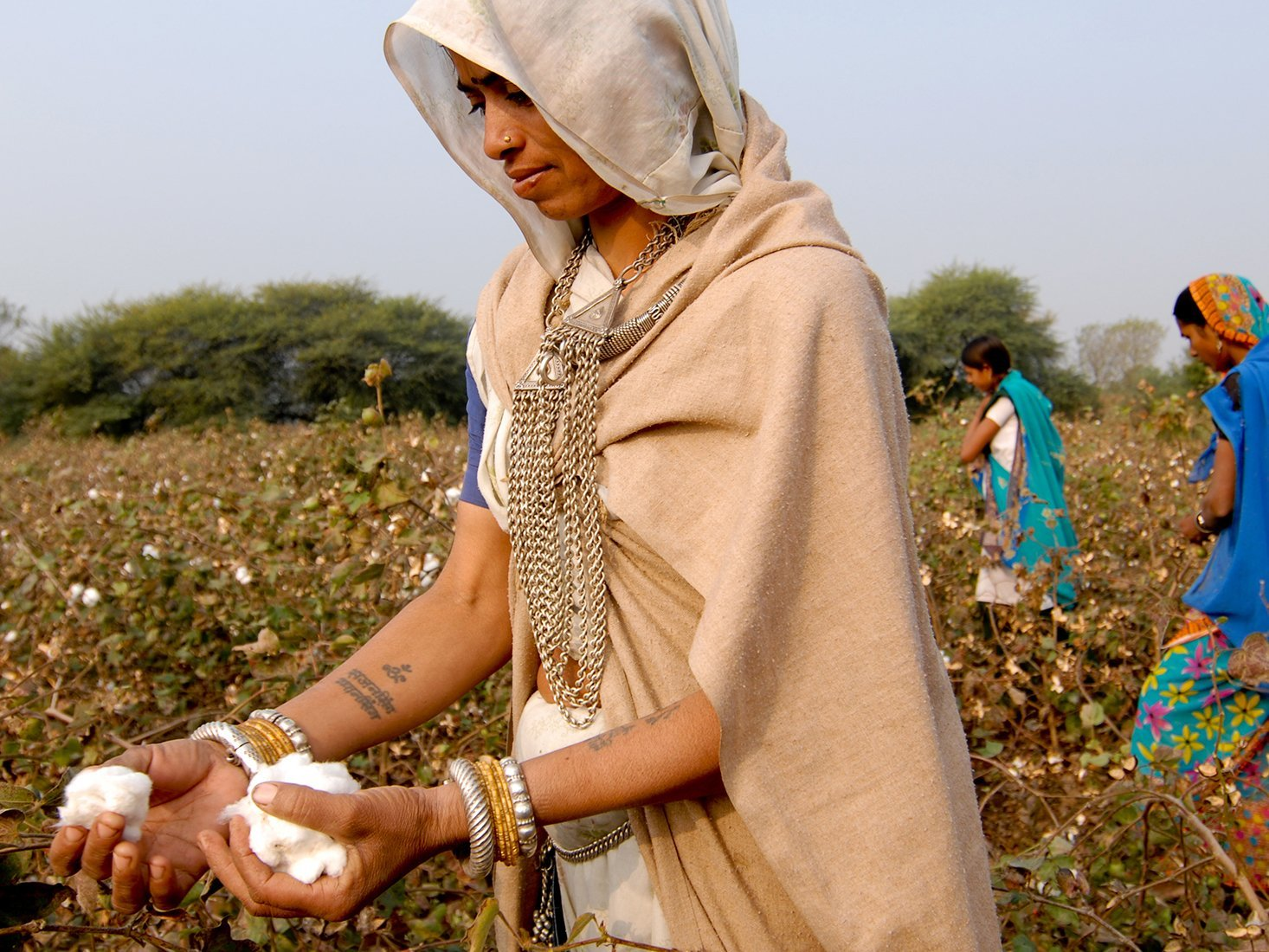 Where does our organic cotton come from?