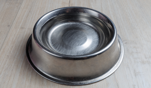 Is It Harmful to Allow Animals of Different Species to Share the Same Water Bowl?