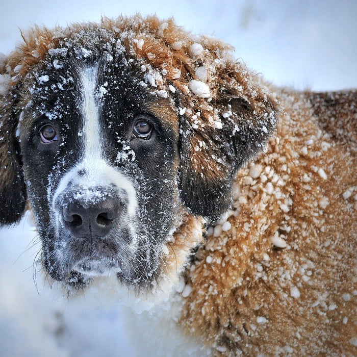 Best Practices for Caring for Your Pet During Extreme Cold