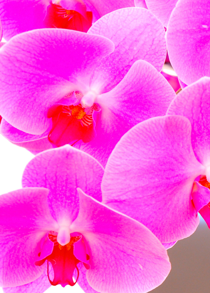 A hint of Orchid
