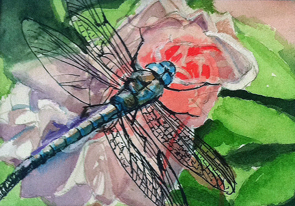 Dragonfly on Rose