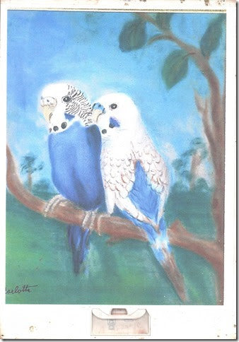 White and Blue Parakeets