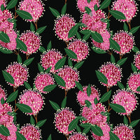 Robyn Hammond- Australian Pink Grevilleas On Black- 100% COTTON