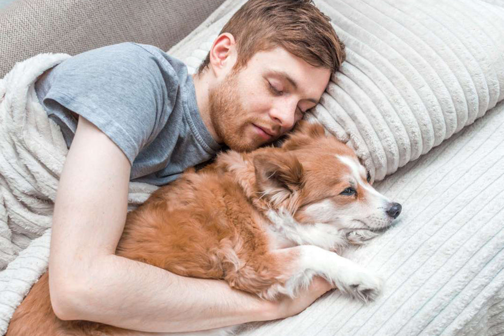 7 Secret Health Benefits Of Sleeping With Dogs