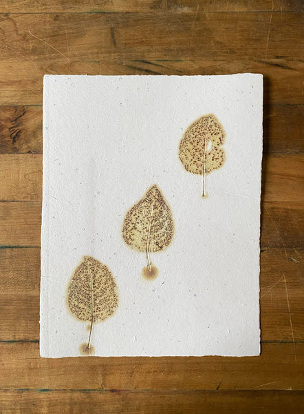 Leaf Transfer Prints