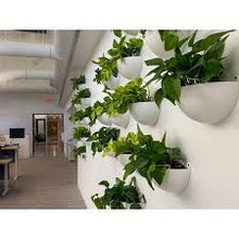 Load image into Gallery viewer, Living Wall Sconce ⭐⭐⭐⭐⭐