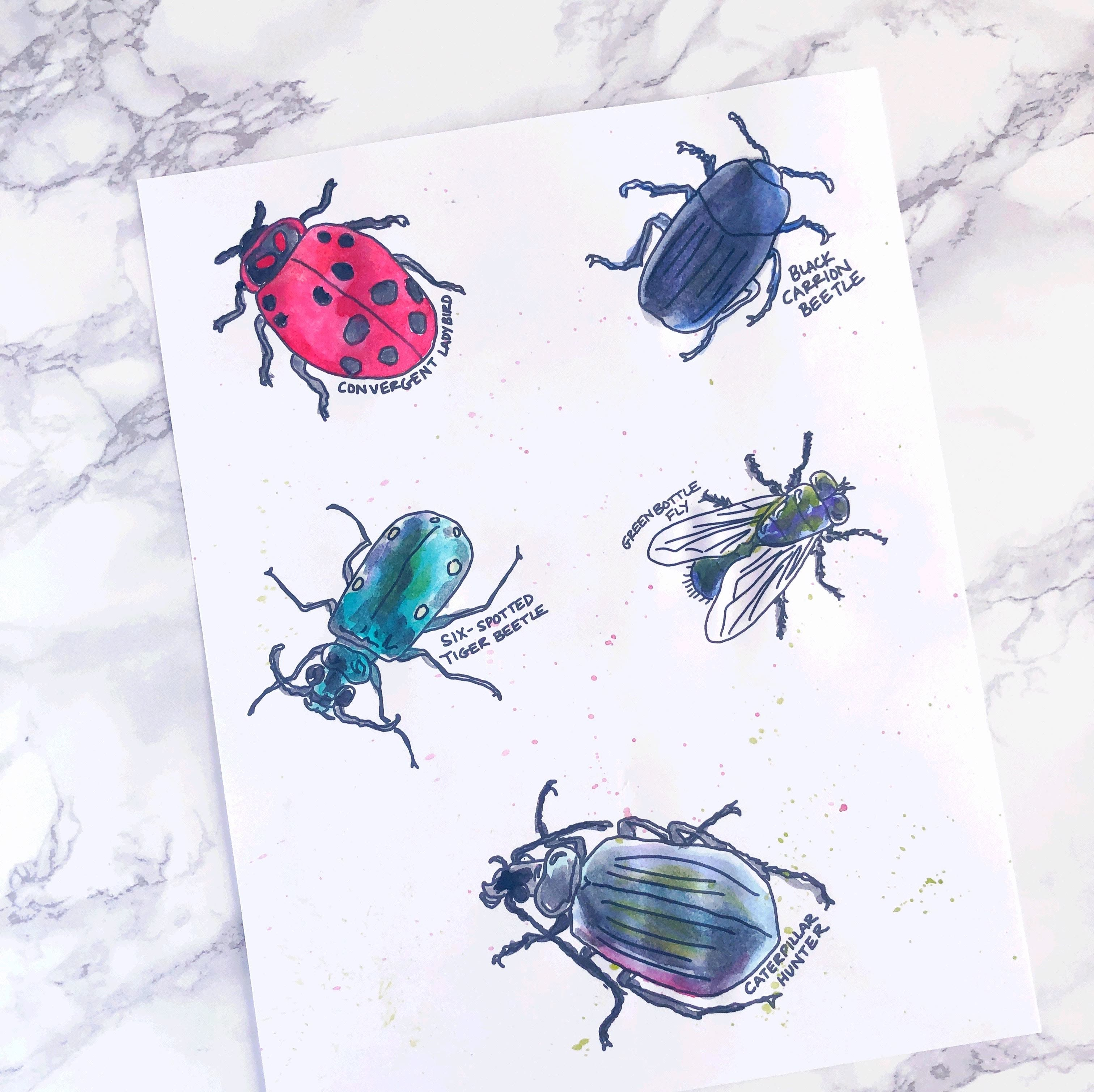 Color a Bug Collection - 9 Page Printable Coloring Pack