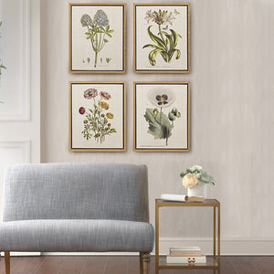 Herbal Botany Set Framed Linen Canvas 4 Piece Set in Transitional Olliix