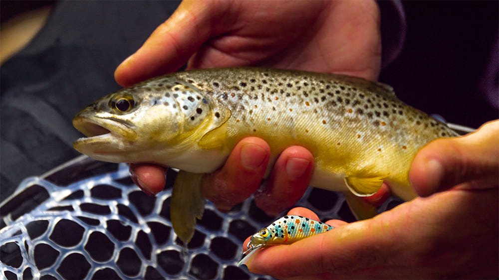 Trout Minnow 45 mm sinking Fishare X Panlure
