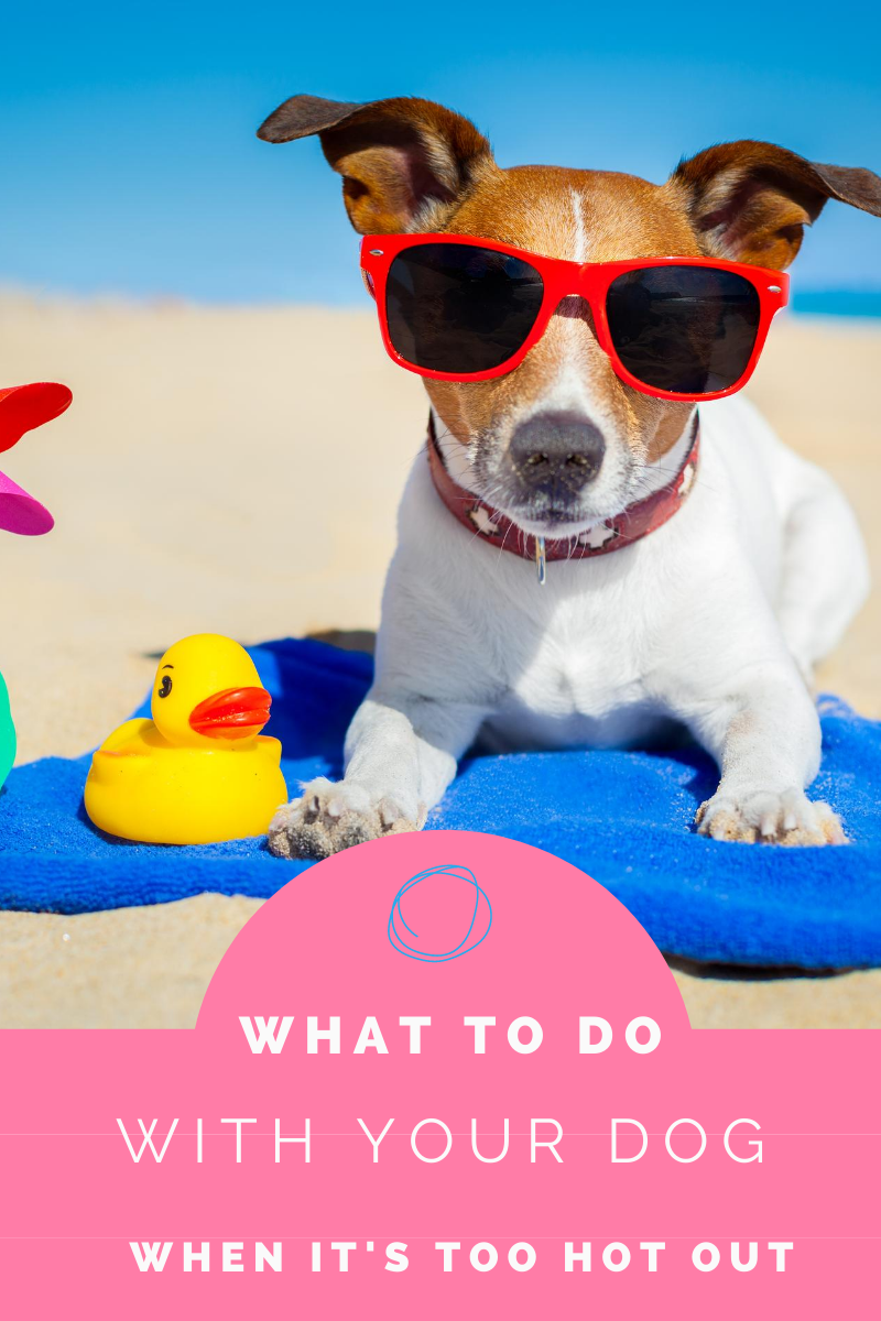 What To Do With Your Dog When It's Too Hot Outside