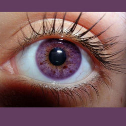 Bright crystal solid purple (12 months) contact lenses