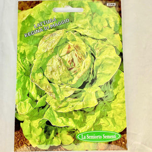 204 - BOSTON LETTUCE