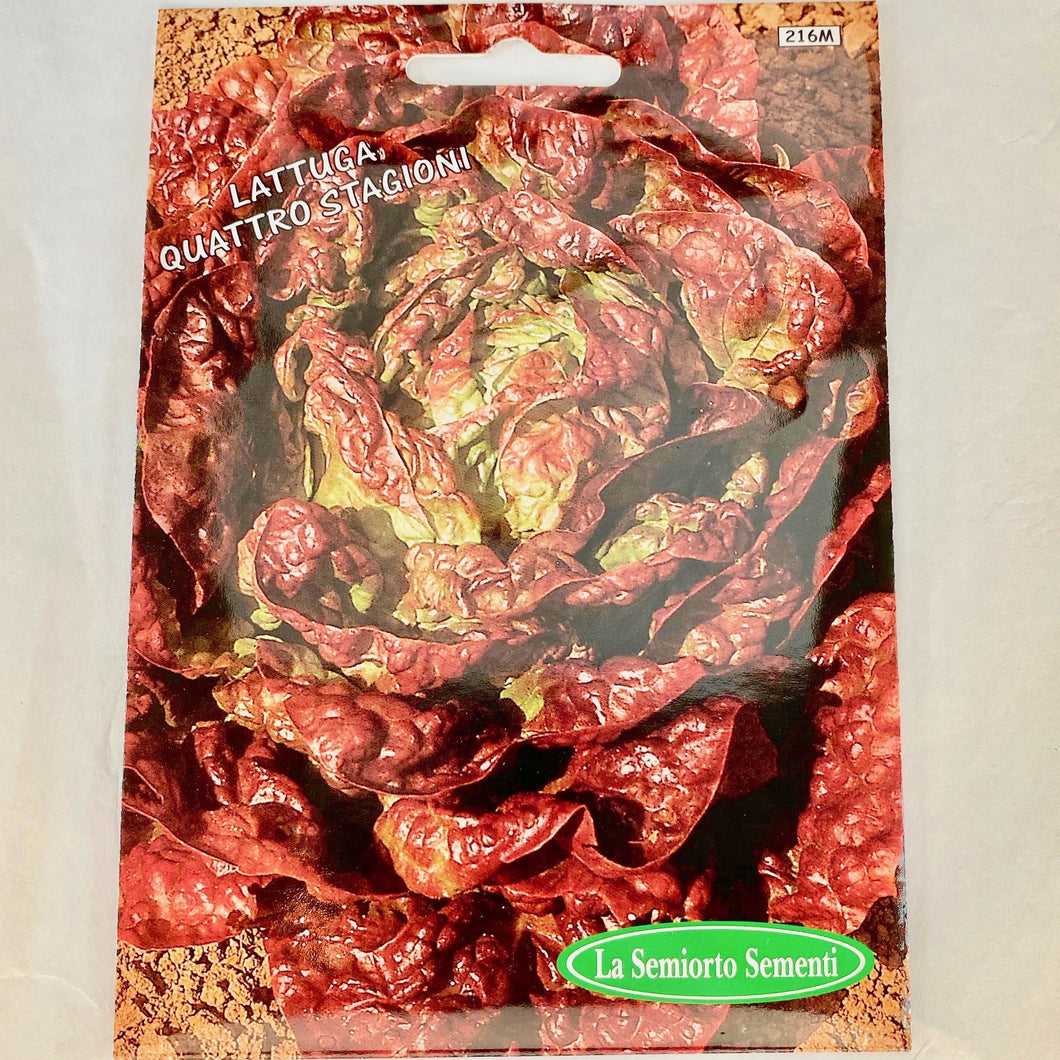 216 - BOSTON RED LEAF LETTUCE