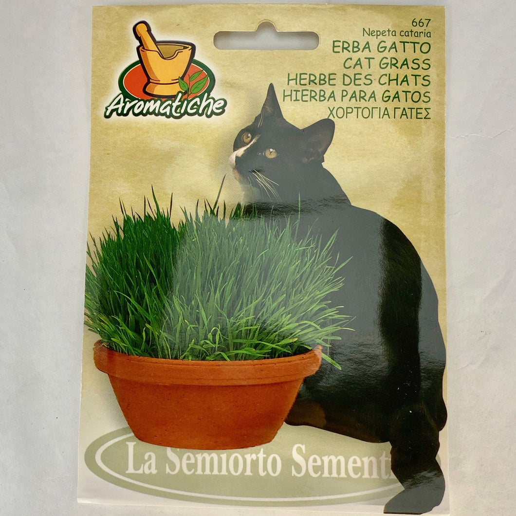667 - CAT GRASS SEEDS