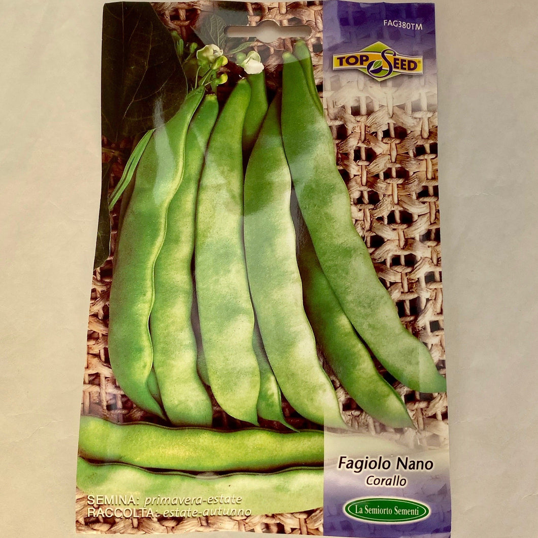 FAG380TM - DWARF BEAN BUSH BEAN WHITE SEED
