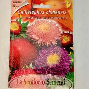 FL509 - ASTER PRINCESS SEEDS