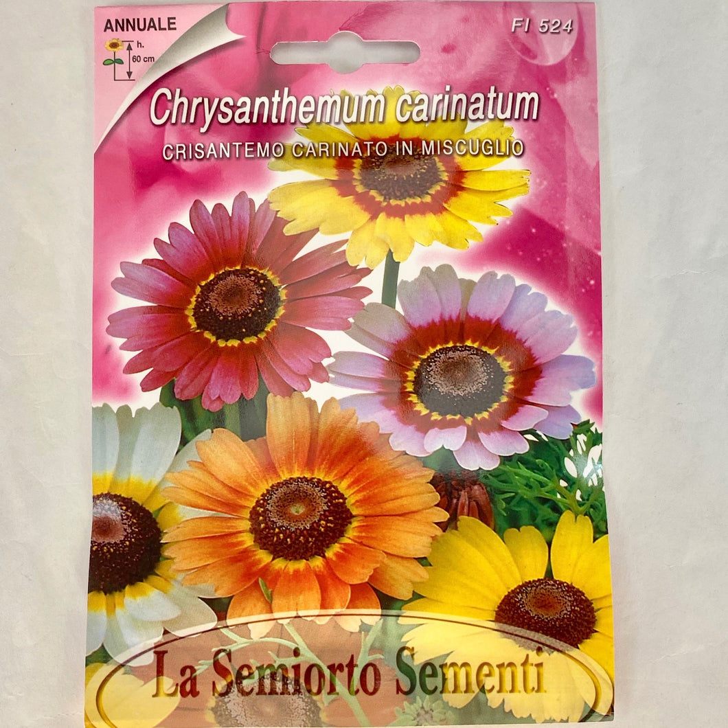 FL524 - CHRYSANTEMUM SEEDS
