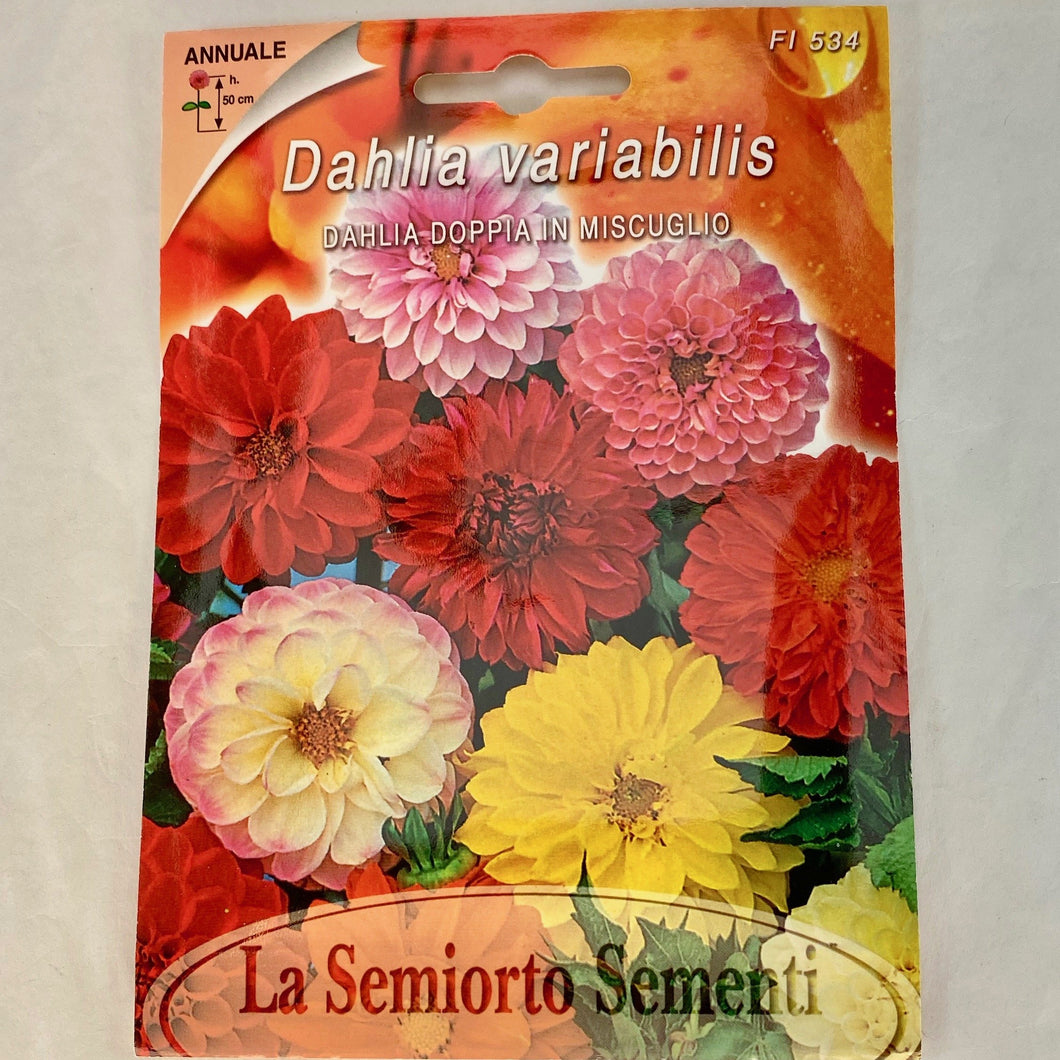 FL534 - DOUBLE DAHLIA SEEDS