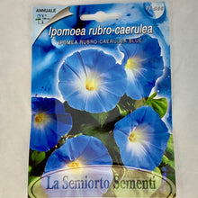 Load image into Gallery viewer, FL566 - BLUE MORNING GLORY SEEDS