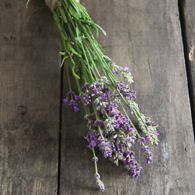 Savor - Herbs - Lavender Bee My Honey