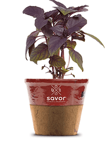 Savor - Herbs - Basil Red Wine Vinegar