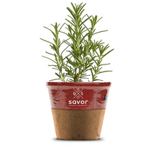 Load image into Gallery viewer, Savor - Herbs - Rosemary Roasting