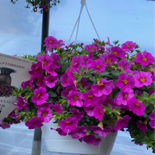 Load image into Gallery viewer, Proven Winners - Calibrachoa - Superbells -Pink Hanging Basket